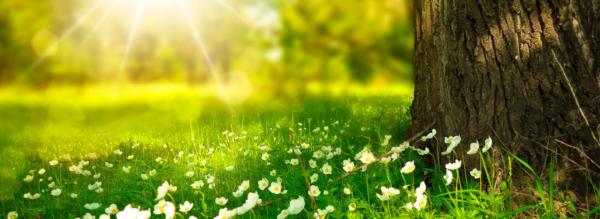 Ayudanos a cuidar el medio ambiente