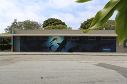 Shark Alliance Mural
