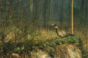 Well-run shoots can make a positive contribution to local habitats and wildlife, says new research
