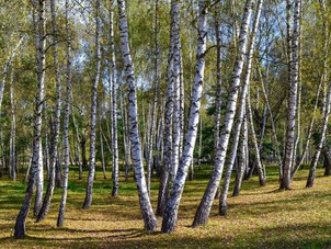 Trees: Let's get the planting in perspective