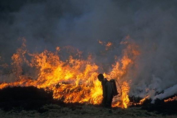 A gamekeeper managing a cool-burn moorland fire