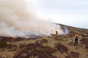 Working for Wildlife: Fighting Fire with Fire