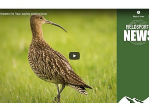 Waders for Real: saving wading birds (Video)