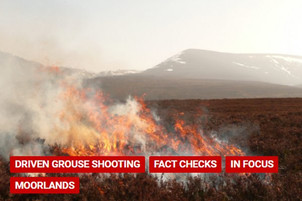 Factcheck: How many wildfires resulted from managed burns escaping control?