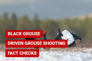 Factcheck: Distribution of black grouse across the UK