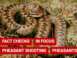 Factcheck: Released pheasants driving adders to extinction?