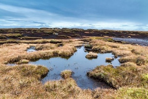 On the GWCT Blog: The Key to a Successful Peat Strategy
