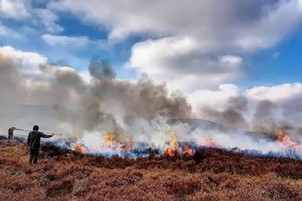 On the GWCT Blog: Latest call from RSPB seems to confuse controlled and uncontrolled burning