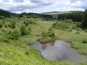BBC report shows that trees aren't the only answer for moorland carbon capture