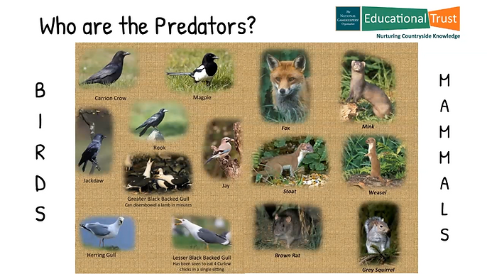 Conservation Fact File 5 - Predator and Pest Control