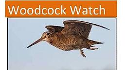 Woodcock Watch