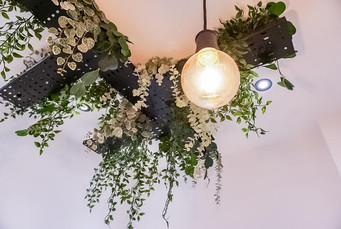 Ceiling Plants