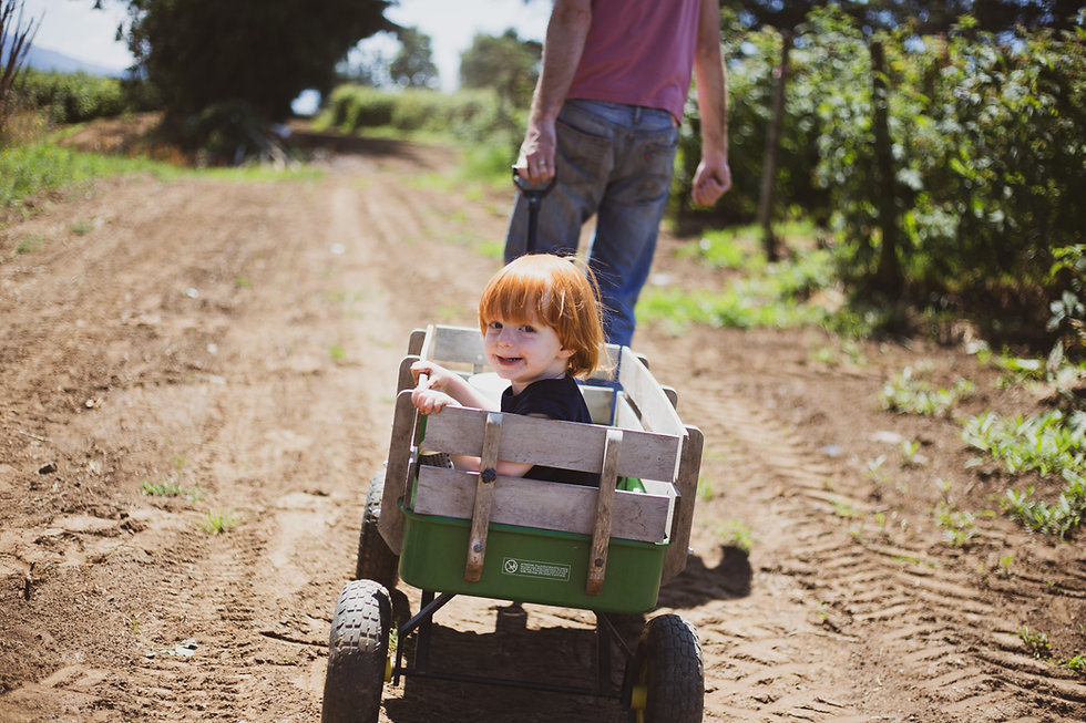 Willems Berry Farm_42.JPG