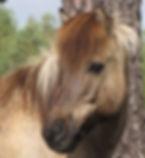 Horse IMG_1312.jpg