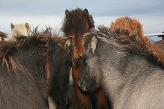 Horses Island 57.jpg