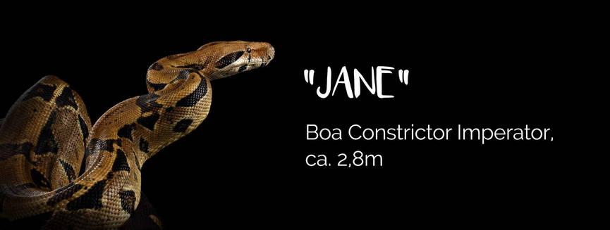 Jane - Boa Constrictor Imperiator