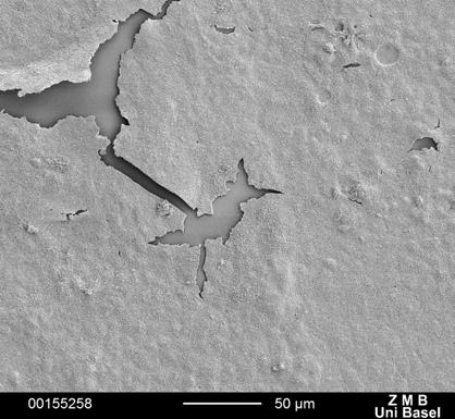 Scanning Elektron Mikroskop (SEM)