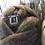 Thumbnail: Gray Rambouillet x Columbia Roving