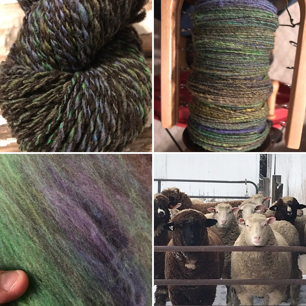 Homegrown gray combed top blended with purple, blue, green, and a bit of yellow Rambouillet/Columbia.