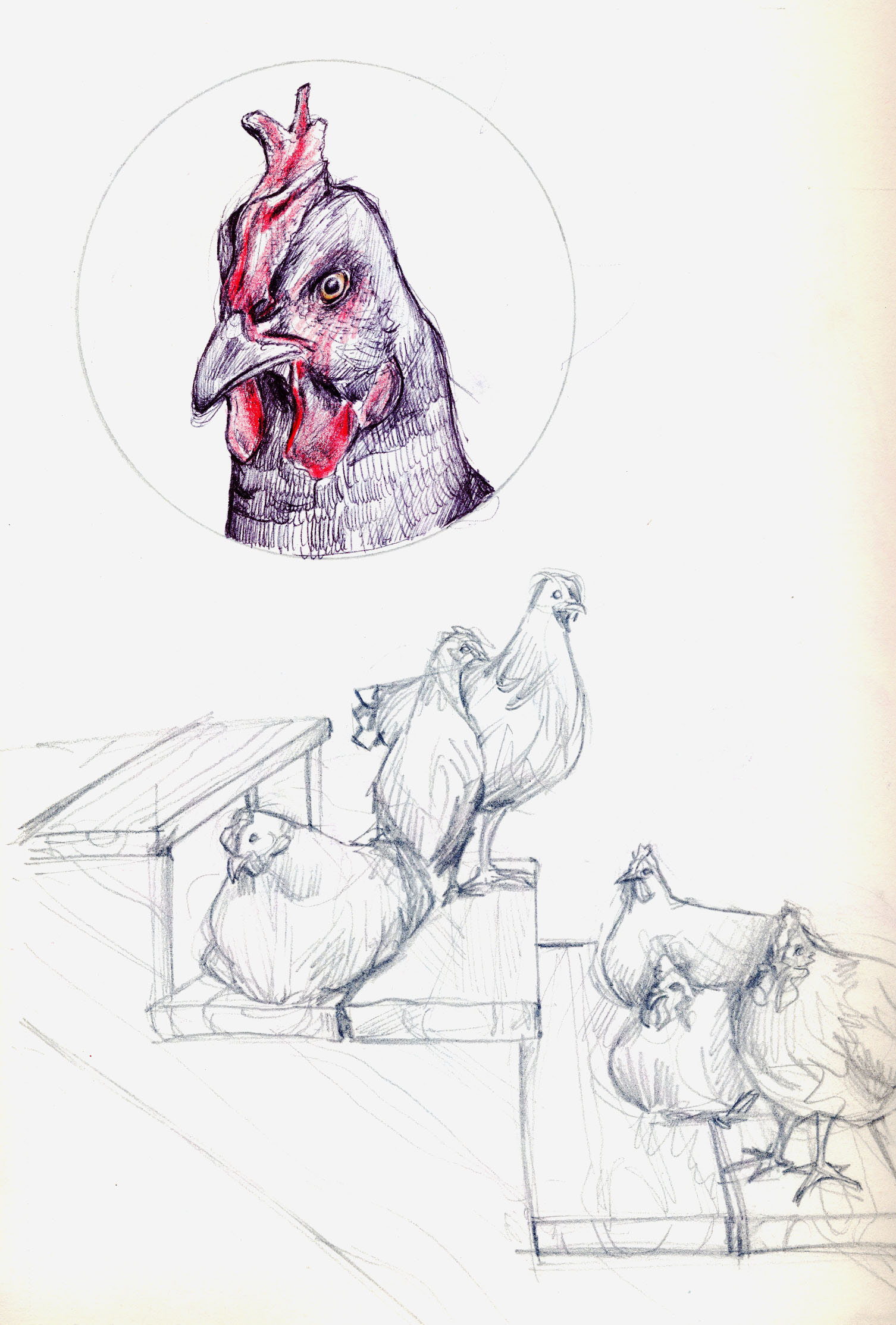 More Chickens