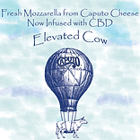 elevated cow button for website.png