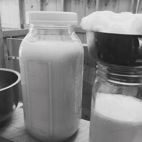 Morning milk #goatmilk #readyforcoffee #mainefarmlife #frothymilk