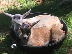 mia and honey bunny in a bucket