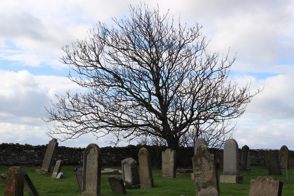 Lindisfarne graveyard tree med