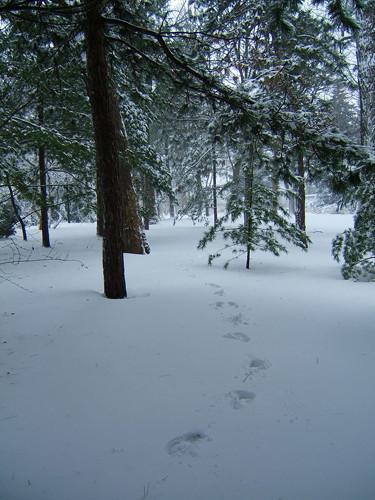 xenon footprints