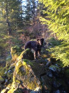 Silas on the mountain