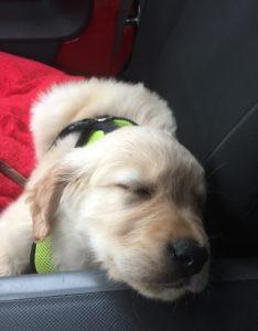 sleepy-pucky