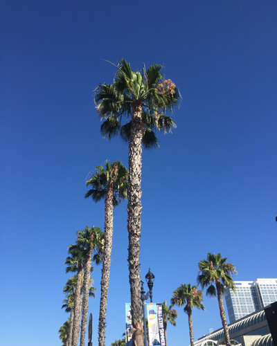 San Diego palms small