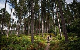 Sherwood Pines.jpg