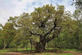 Sherwood Forest.jpg