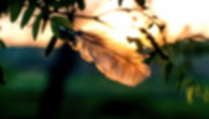 blur-branch-color-1088115_edited_edited.jpg