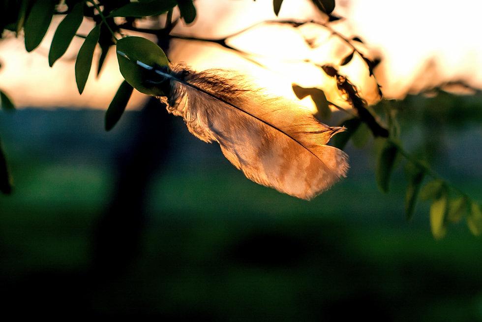 blur-branch-color-1088115_edited.jpg