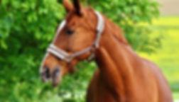 Animal-Imaging_vets-equine_callout.jpg