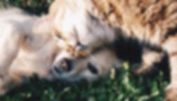 Animal-Imaging_vets-small-animal_callout