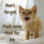 Small kitten meowing pitifully. Remember your pets in prepping for disaster