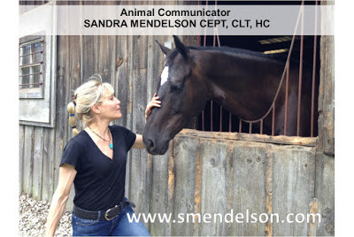 Universal Wisdom: Florida Equine Athlete Magazine Interview with Sandra Mendelson