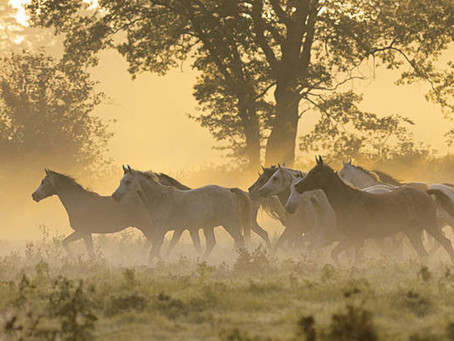 A MESSAGE FROM HORSE CONSCIOUSNESS ON WHAT WE CAN REALIZE FROM THEM