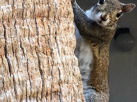 Squirrels Don't Have Sunday Dinner With Mom