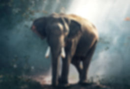 elephant in woods.jpg