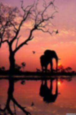 GORGEOUS ELEPHANT PIC.jpg