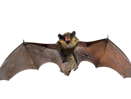 What can a Bat Teach Us About Human Fear and Anxiety?