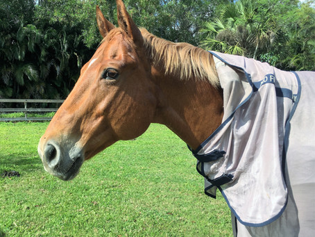 Horses: On Kids- Part 1