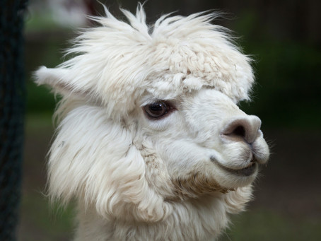 Llama Guidance for Honoring Your Soul