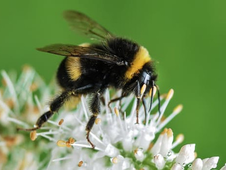 What Bees Want Us To Know