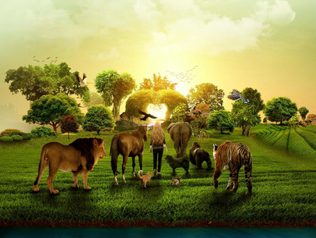 The Animal Kingdom's Message To Spiritual Awakeners