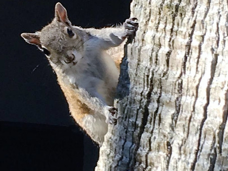 Try The Squirrel Test